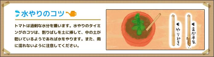 トマト_水やり