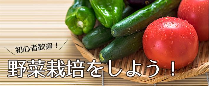 野菜の育て方―にんにく